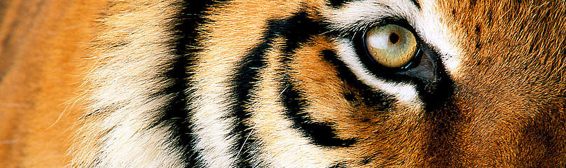 Tiger Dyr  	© National Geographic Stock/ Michael Nichols / WWF