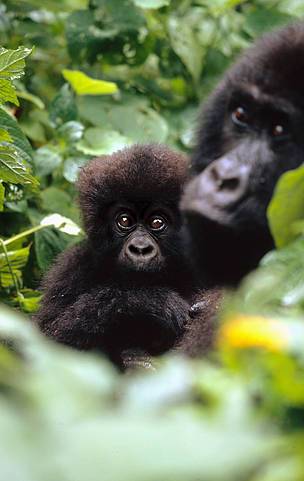 © Martin Harvey / WWF