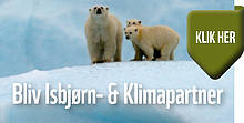 isbjørn og klimapartner small  	© WWF